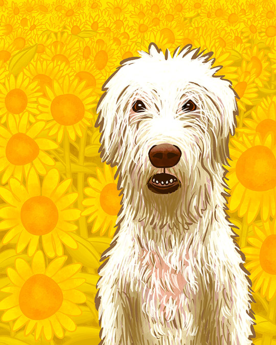 Large white dog sitting in a sunflower field