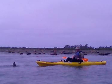 Kayaking with the seals at Elkhorn Slough.