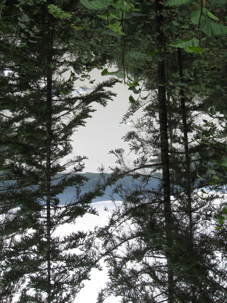 rare Alaskan upside-down trees, the right tree's branches are angled in a way that makes it look right-side-up