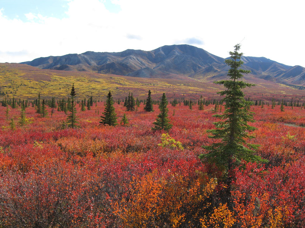 Alaska fall colors