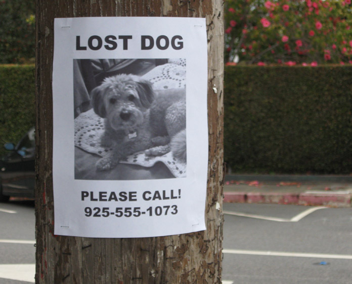 typical lost dog sign on a post